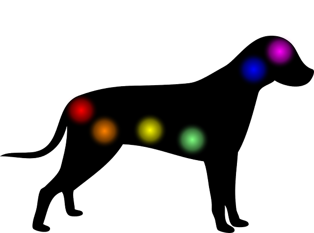 Les chakras du chien