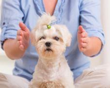 magnétisme sur les animaux